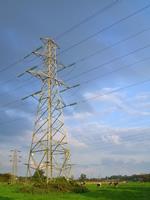 EDF Energy Online Saver